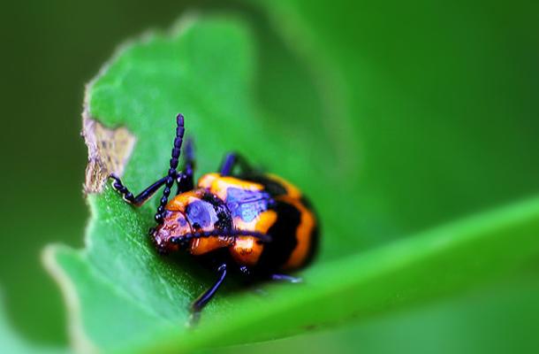 Macro bugs